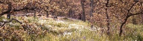 Shakespeare Blog - THE TEMPEST - Island Meadows